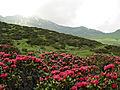 Seiser Alm - panoramio - Frans-Banja Mulder (3).jpg