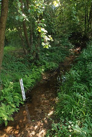 Kobilje Creek - Kobilje Creek in Selo in summer (July 2014)
