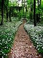 Sentiero fiorito.jpg