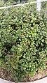 Seoullo 7017 plants (3).jpg