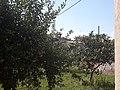 Serinyà - prop de l'ermita de Sant Sebastià - 20200808 162557.jpg