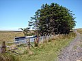 Sheepfold near Cae'rmynach - geograph.org.uk - 202346.jpg