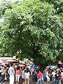 Shenkeng 2 070429.jpg
