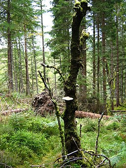 Shin Forest - geograph.org.uk - 1513921