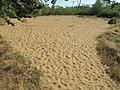 Site des Charmes (Ain) 6.jpg