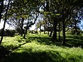 Small wood near West Dizzard - geograph.org.uk - 501352.jpg