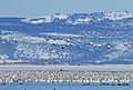 Snow Geese Migration (5658353082).jpg