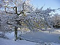 Snow covered tree and frozen pond, South Lodge Crescent, Enfield - geograph.org.uk - 1150308.jpg