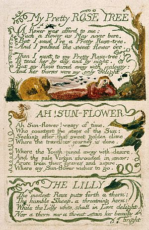 The Lilly - Image: Songs of Innocence and of Experience, copy F object 47 My Pretty ROSE TREE