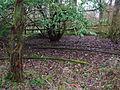 Speir's Coronation Garden 2.JPG