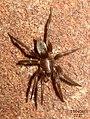Spider (FG) (5655020635).jpg