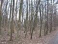 StadwaldFrankfurt Sachenhaeuserlandwehrweg IMG 1793.JPG