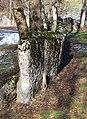 Standing stones (Bauges).JPG