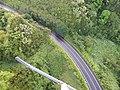 Starr-141014-2180-Caesalpinia decapetala-aerial view-Kakipi Gulch Haiku-Maui (25128907582).jpg