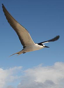 white seabird flying against blue sky