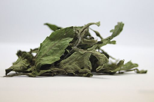 Stevia rebaudiana leaves dry