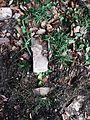 Stones!grass&leaves(byBartoszBąk).jpg