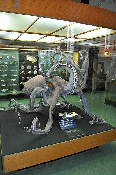 File:Stralsund, im Meeresmuseum (2013-02-13), by Klugschnacker in Wikipedia (49).JPG