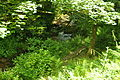 Stream in Lamorna valley (7268).jpg
