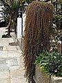 Strovolos, Nicosia - Street.jpg