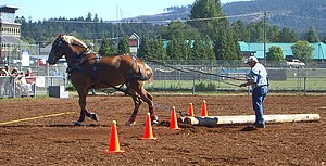 Horse pulling - An obstacle course competition
