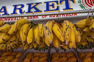 Lady Finger banana Banana cultivar