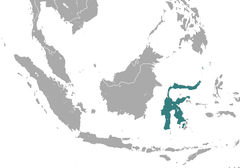 Sulawesi Dwarf Cuscus area.png