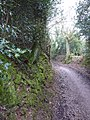 Sunken Lane - geograph.org.uk - 1711869.jpg