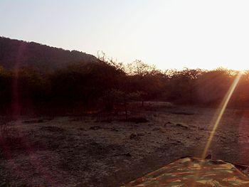 Sunset in Gir Forest.jpg