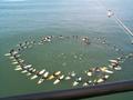 Surfer memorial service.PNG