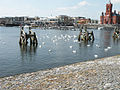 Swans in Cardiff Bay - geograph.org.uk - 1377563.jpg