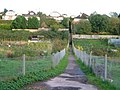 Sweetbrier Lane allotments - geograph.org.uk - 268032.jpg