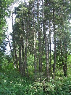 Tabria Village in Pärnu County, Estonia