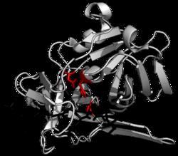 Действие протеазы в организме, фермент, который делает белок и аминокислоты клещами