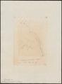 Taenioptera fumicolor - 1856 - Print - Iconographia Zoologica - Special Collections University of Amsterdam - UBA01 IZ16500215.tif
