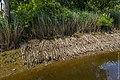 Technisch-biologische Ufersicherung an der Wümme, Versuchsstrecke 2 (50678706856).jpg