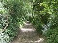 Tennyson Trail descends to Carisbrooke - geograph.org.uk - 498333.jpg