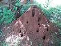 Termite Mounds in Salem.jpg