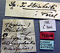 Tetramorium steinheili casent0101566 label 1.jpg