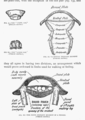 The British Woodlice 07.png