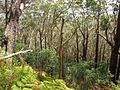 The Illawarra Escarpment Track - panoramio (1).jpg