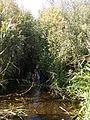 The Pol River anabranch.JPG