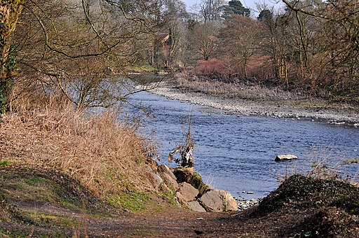 The River Taff adjacent to Forest Farm - geograph.org.uk - 1748154