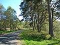 The Woods At Craigengillan - geograph.org.uk - 422325.jpg