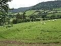 The slopes of Wenallt - geograph.org.uk - 471058.jpg