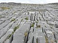 The terrain of Inishmore is composed of limestone pavements - Pavement calcaire de l'île d'Inis Mor (Inishmore).jpg