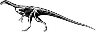 Thecodontosaurus - Skeletal restoration