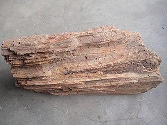 Fossil wood - Fossil wood of Tamilnadu