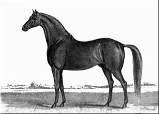 Timoleon (horse) American Thoroughbred racehorse