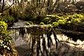 Tintern stream - panoramio.jpg